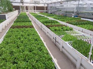 Flourish Farm Colorado Aquaponics